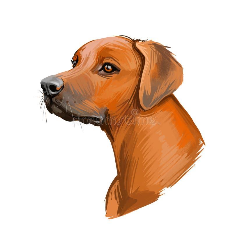 Rhodesian Ridgeback dog portret geïsoleerd op wit Digitale illustratie van handgetekende hond voor web-, T-shirts- en puppy's stock illustratie