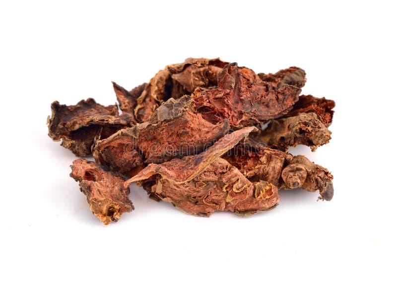Rhodiola-rosea Wurzeln lizenzfreies stockfoto