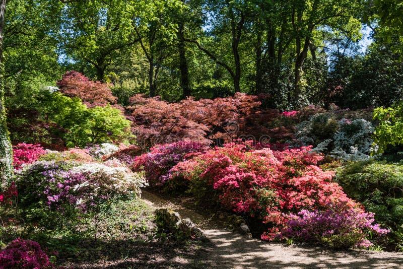 Rhododendren und Azaleengärten stockfoto