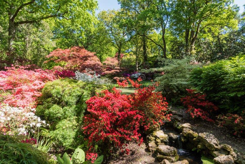 Rhododendren und Azaleengärten stockfotografie