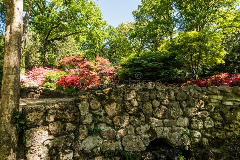 Rhododendren und Azaleengärten stockbild