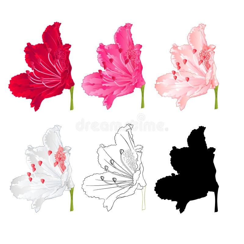 Rhododendron λουλουδιών ο θάμνος βουνών κόκκινος, ρόδινος, ανοικτό ροζ, άσπρος, περιγράφει και σκιαγραφία σε μια άσπρη εκλεκτής π διανυσματική απεικόνιση