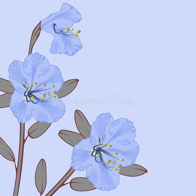 Free Rhododendron. Stock Photos - 19054673