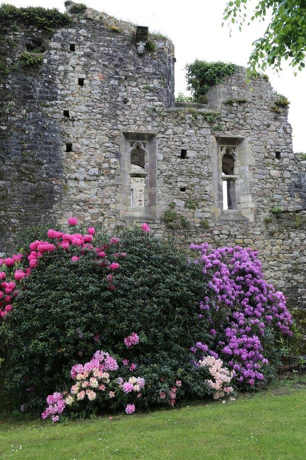Rhododendron στοκ φωτογραφίες με δικαίωμα ελεύθερης χρήσης
