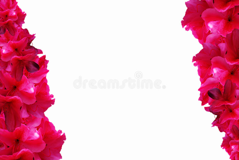 Rhododendron Background vector illustration
