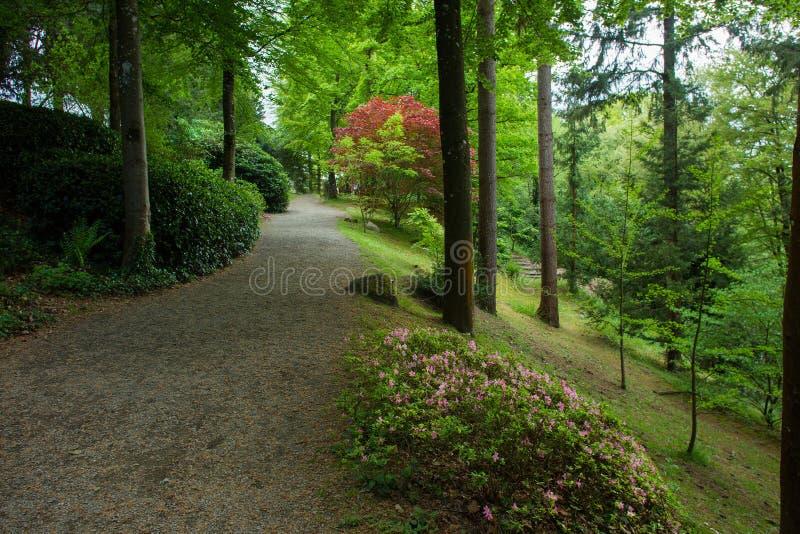 Rhododendron Bl?ten- und Topiarykunst in Maulivrier japanisch lizenzfreie stockfotografie