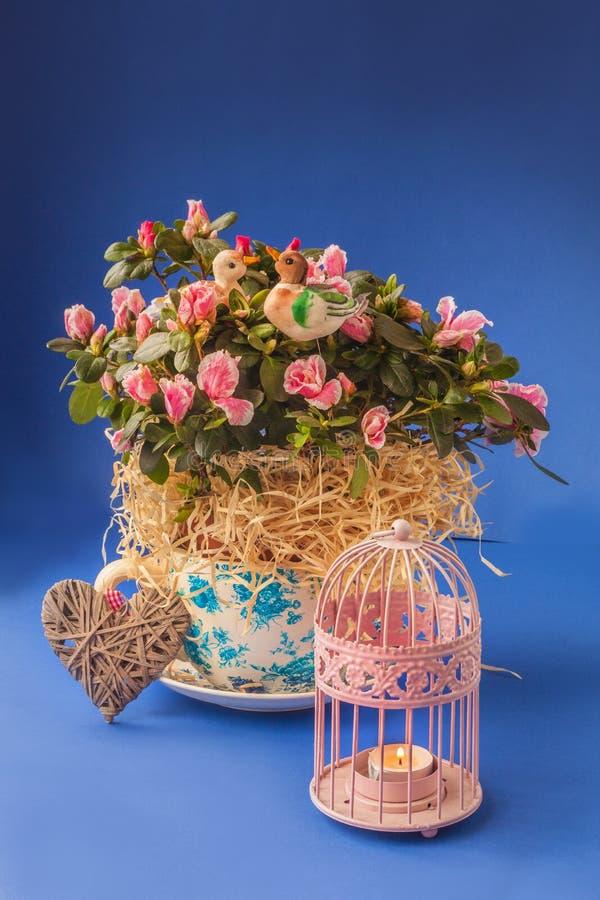 Rhododendron d'azalée dans le pot et le chandelier de vintage sur un bleu images stock