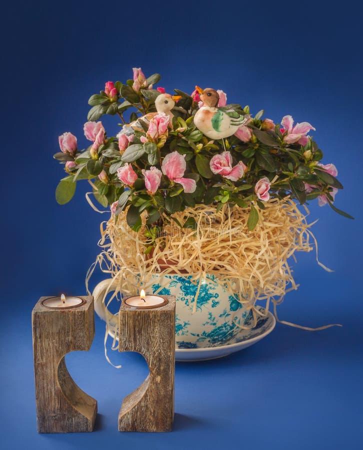 Rhododendron d'azalée dans le pot et le chandelier de vintage sur un bleu photographie stock libre de droits