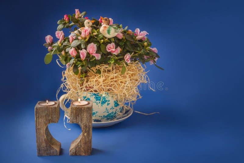 Rhododendron d'azalée dans le pot et le chandelier de vintage sur un bleu photo libre de droits