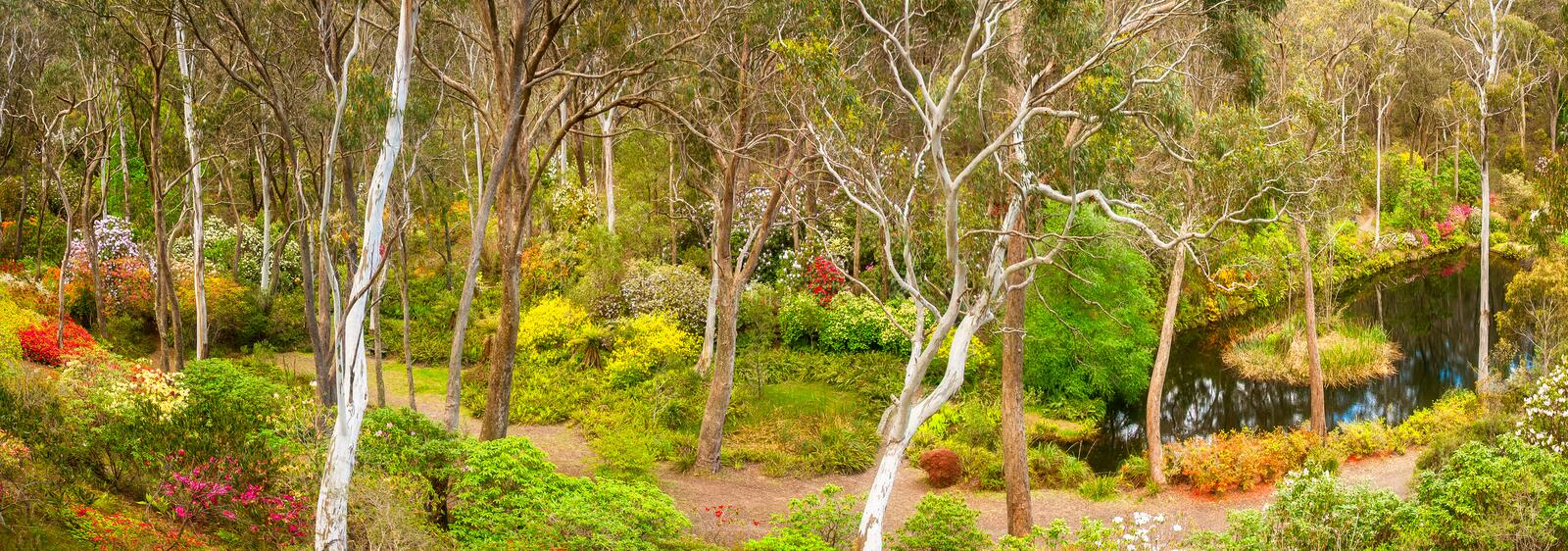 Download Rhododendron Garden Panorama Stock Photo - Image of environment, lake: 86914902