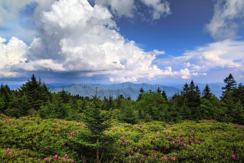 Rhododendron trädgårds- Roan Mountain State Park TN arkivfoton