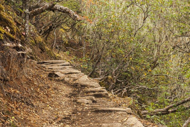 Rhododendronskog arkivfoto