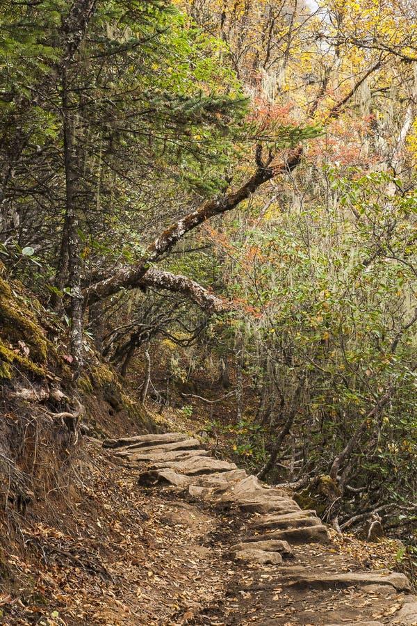 Rhododendronskog arkivbilder