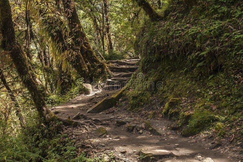 Rhododendronskog fotografering för bildbyråer
