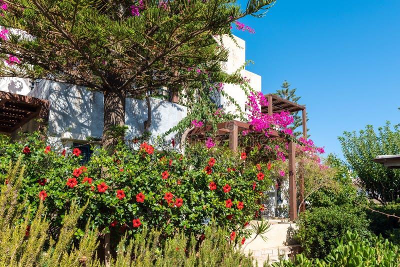 RHouse μεταξύ των πράσινων εγκαταστάσεων στο νησί της Κρήτης, Ελλάδα στοκ εικόνα
