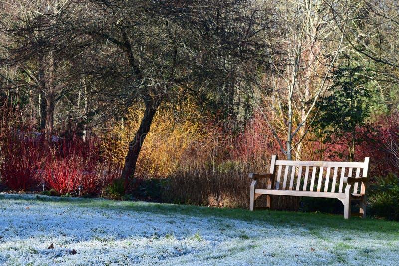 RHS Rosemoor ogród, Wielki Torrington, Devon w zimie obraz stock