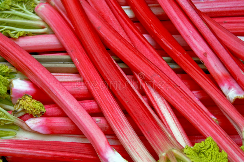 Download Rhubarb stock image. Image of fruit, nature, diet, healthy - 2272937