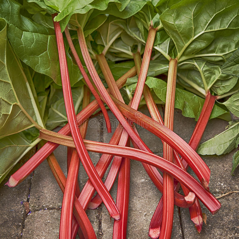 Rhubarb stock photos