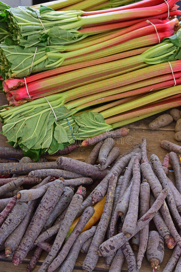 Rhubarb and purple carrots on rustic wooden table. These two distinct vegetables believed to provide superfood health benefits. It is interesting to note that royalty free stock photography