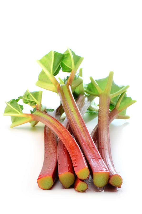 Rhubarbe organique fraîche photo stock