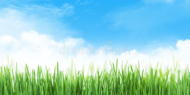 Riassunto del campo estivo e dello sfondo del cielo immagine stock