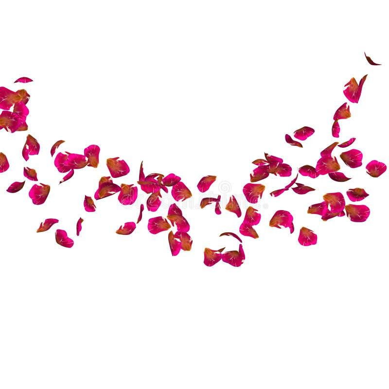 Ribbade röda kronblad flyger i en cirkel Centrera fritt utrymme för din foto eller text stock illustrationer