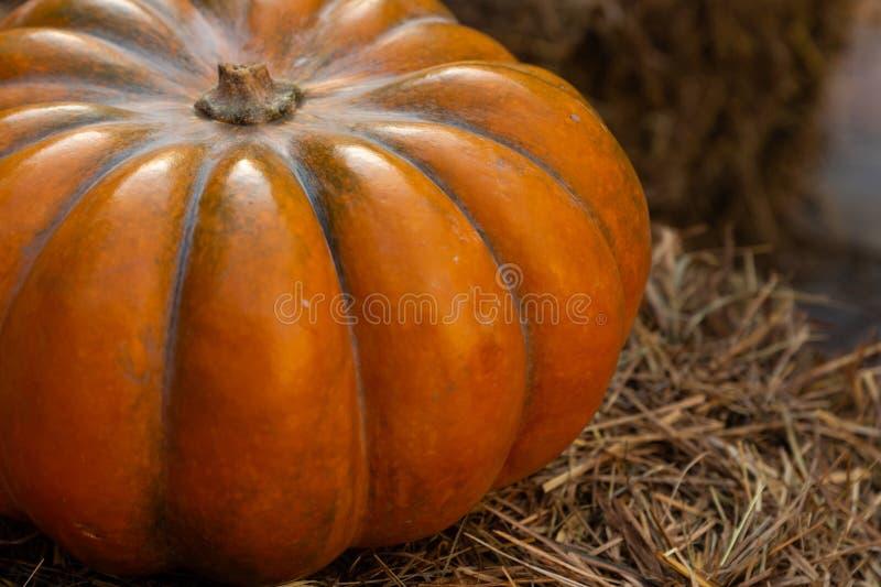 Ribbed orange big pumpkin closeup on a pile of hay rustic design background stock image