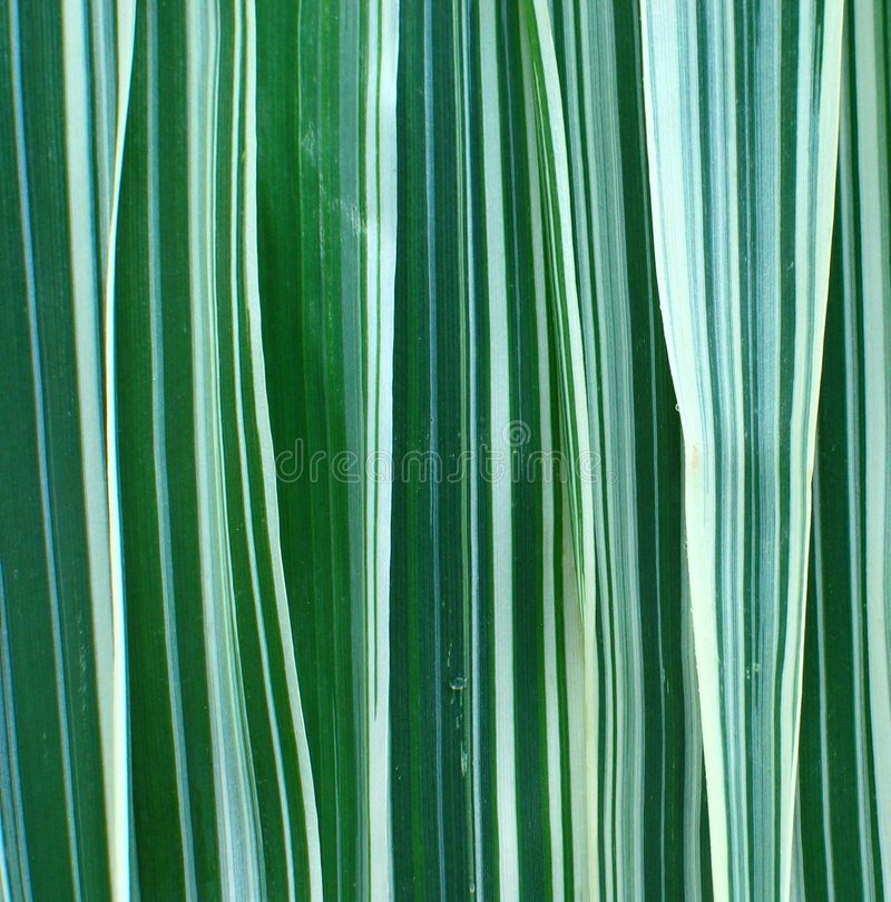 Download Ribbon Grass Background stock image. Image of stand, stripes - 221569