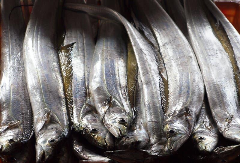 Ribbonfish fresco para la venta en Taiwán foto de archivo libre de regalías