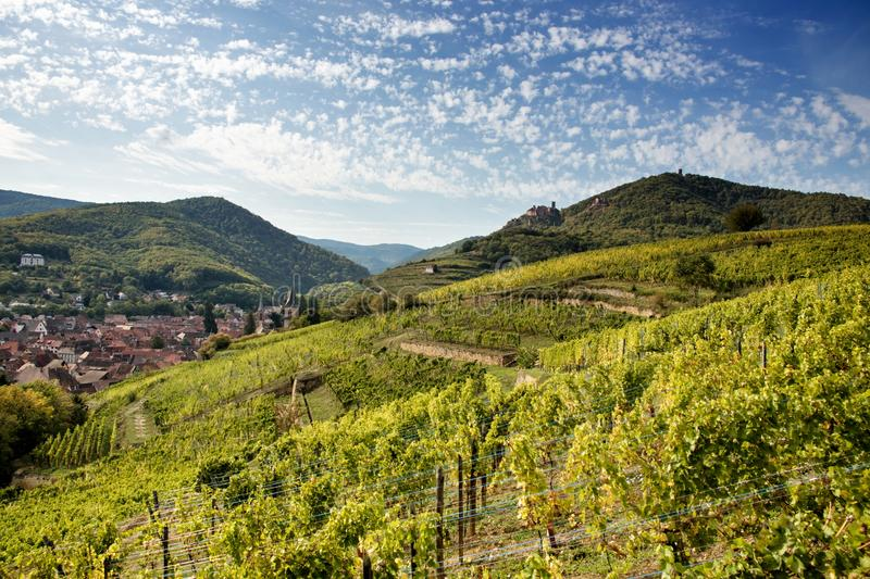 Ribeauville vineyards and castles stock photography