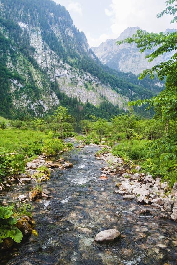 Ribeiro alpino bonito com prado verde e montanhas na parte traseira Parque nacional de Berchtesgaden foto de stock royalty free