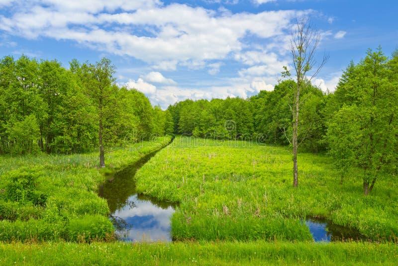 Ribeiro e prado e floresta. fotos de stock