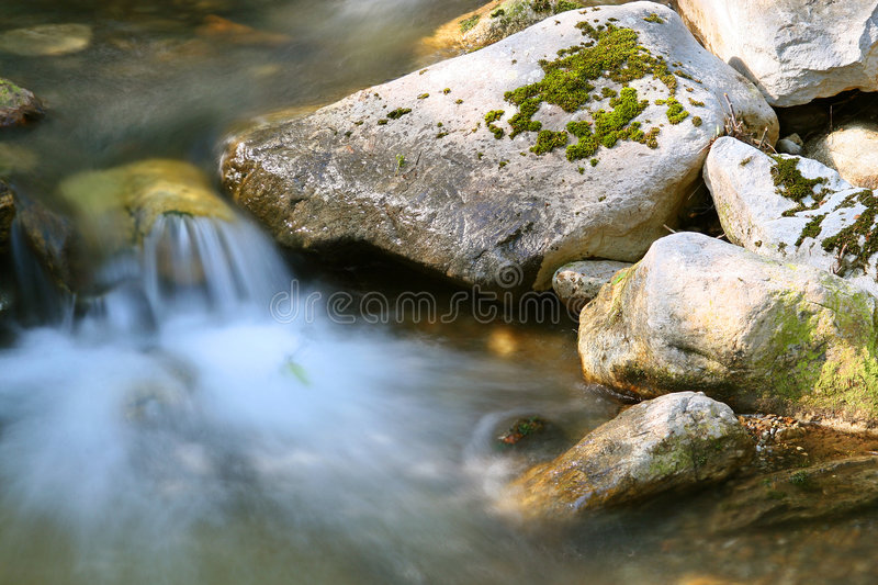 Ribeiro na floresta foto de stock royalty free