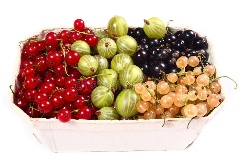 Ribes ed uva spina rossi, bianchi, neri freschi fotografie stock