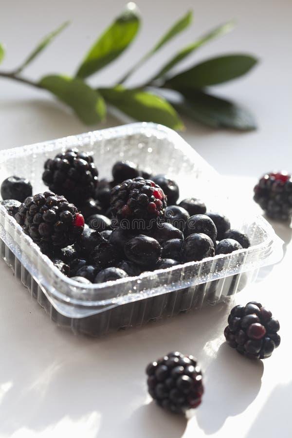 Ribes neri dolci maturi freschi sul fondo del wight fotografia stock