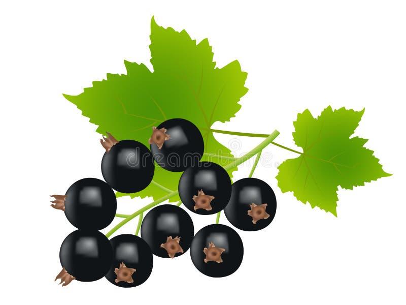 Ribes nero illustrazione di stock