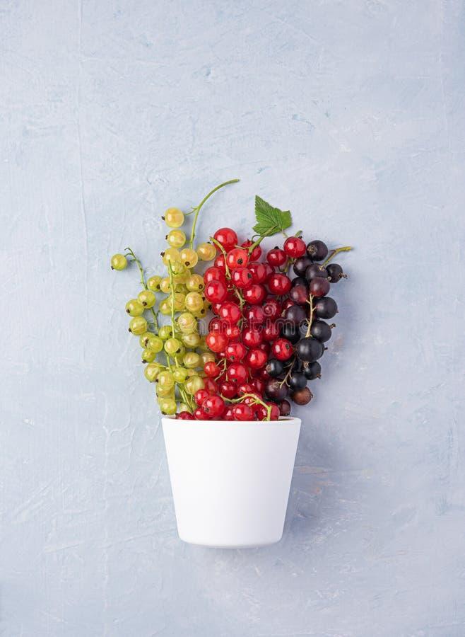 Ribes nero rosso fresco in tazza bianca sulla vista superiore del fondo di legno blu immagine stock