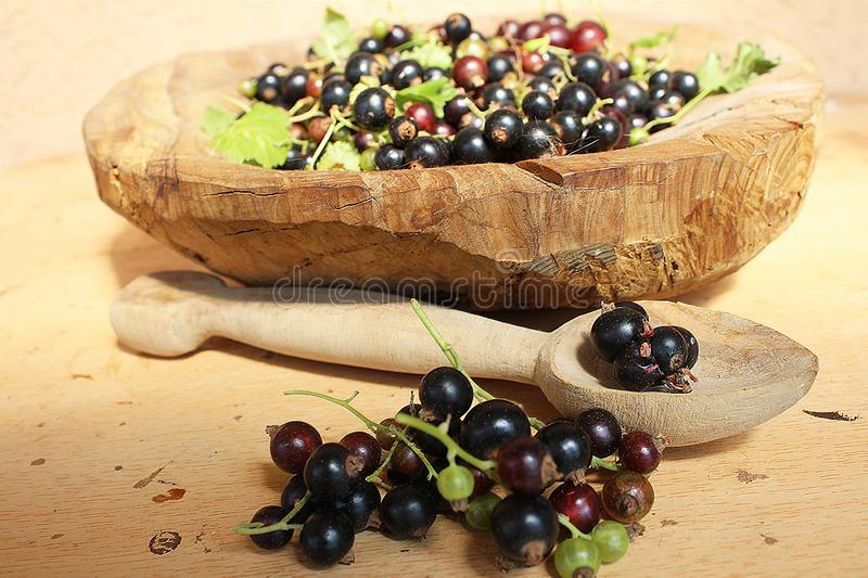 Ribes nigrum commonly The blackcurrant or black currant in a wooden pot on wooden background, in artistic Still life style. Macro photography royalty free stock images
