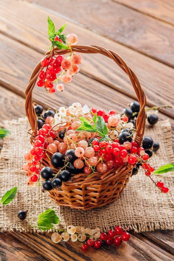Ribes rosso, rosa, in bianco e nero immagine stock