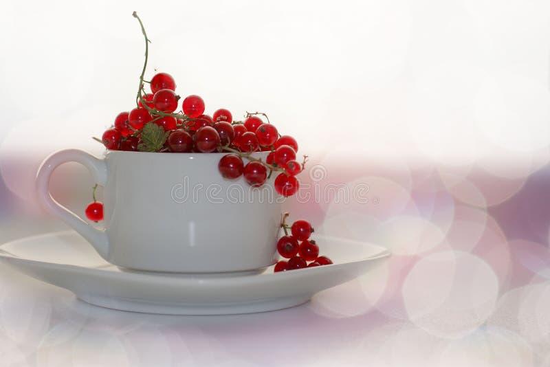 Ribes rosso in una tazza bianca con un piattino del bokeh sulle bacche brillantemente d'ardore bianche di un fondo di estate immagini stock libere da diritti