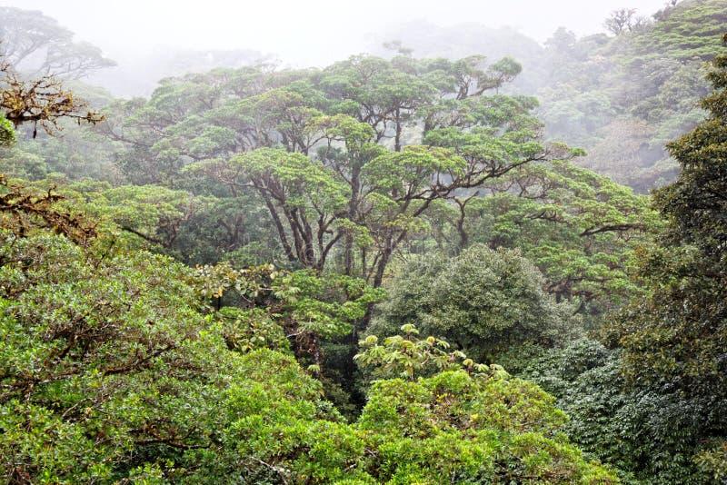 rica дождя пущи Косты стоковое изображение rf