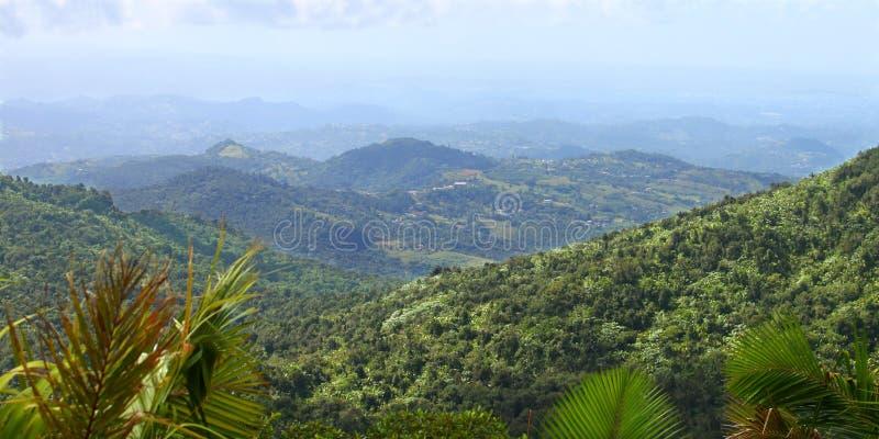 rican puerto的雨林 免版税库存照片