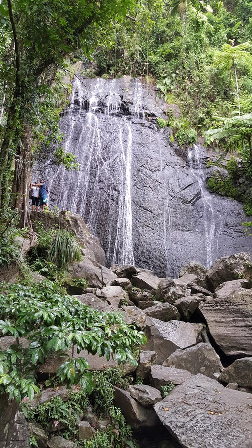 rican puertorainforest arkivfoton