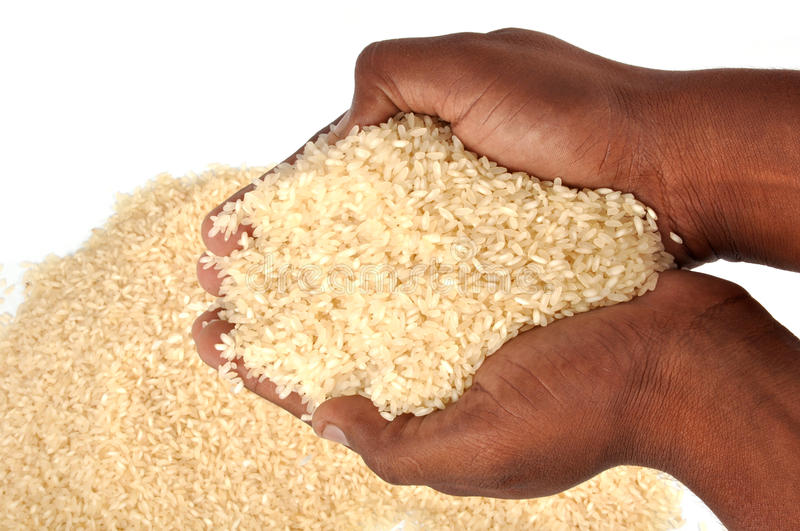 Download Rice stock image. Image of element, economy, grain, healthy - 15586553