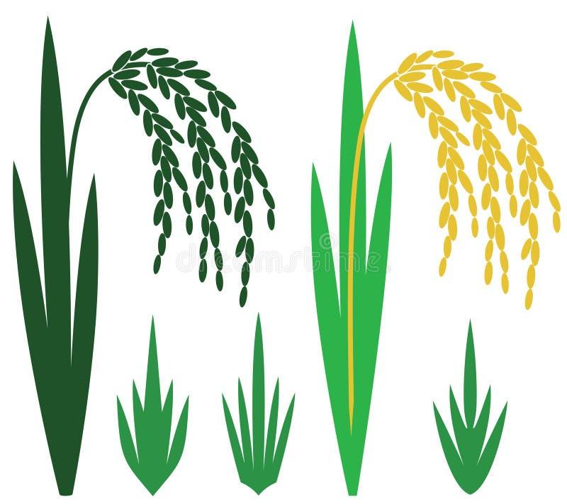 Rice ilustracji