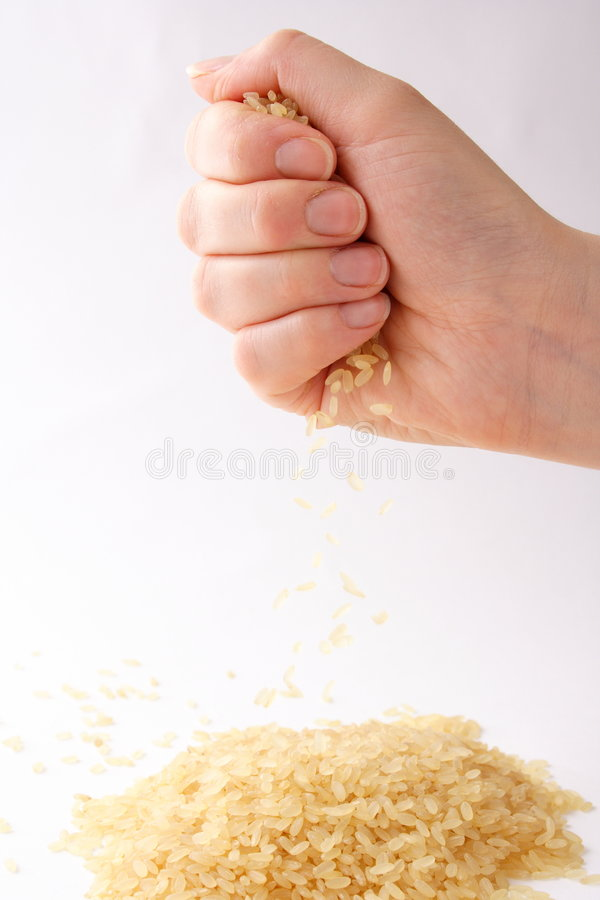 Download Rice stock image. Image of falling, holding, white, drop - 496257
