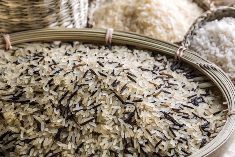 Rice obrazy stock