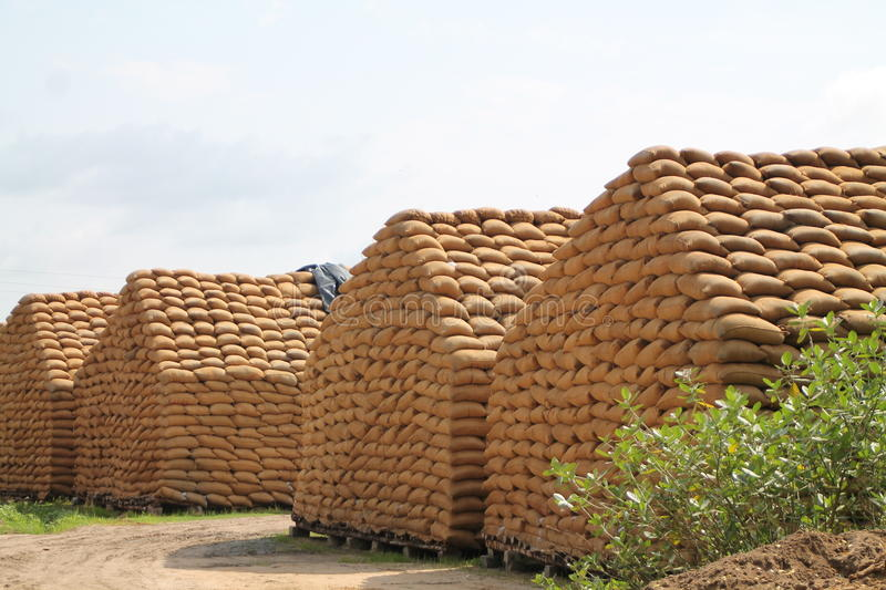 Rice Bags. To supply to the needs royalty free stock photo