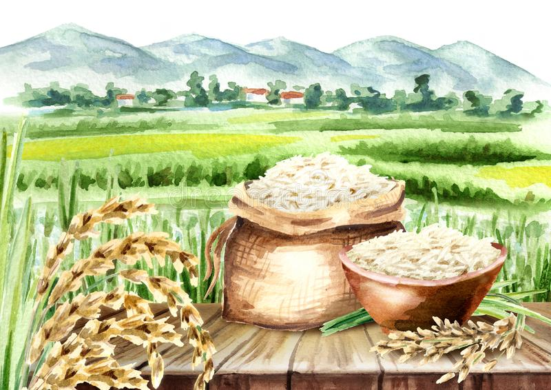 Rice composition in landscape with field. Watercolor hand drawn royalty free illustration