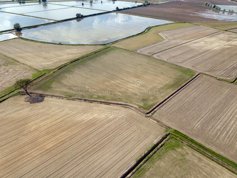 Rice farmed fields in italy aerial view royalty free stock photo